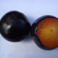 Black-Amber-4