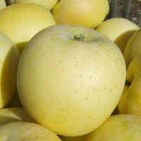 Délicia, fruit 3f  Pugère, 10-08-07