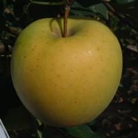 Golden 02 C8 006