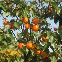 Orangered 3
